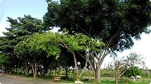 Prefeitura denominará praça no Eldorado/Cecap